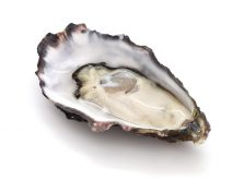 img_oyster
