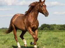 img_horse